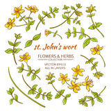 St.John's wort elements vector set. On white background Royalty Free Stock Images