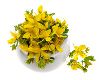 St. John's Wort flowers Stock Images