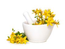 St. John's wort flowers in medical mortar Stock Photography