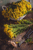 St. John's wort (Hypericum). Dried, on a wooden table Royalty Free Stock Image