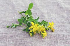 St. John's wort (Hypericum perforatum) flowers Stock Photo