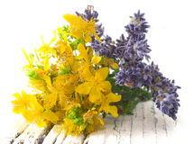 St John's wort and lavender Stock Image