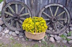 St John? s wort medyczni kwiaty w koszu i starych karecianych kołach Zdjęcia Royalty Free