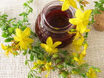 St. John's wort oil in bottle Stock Image