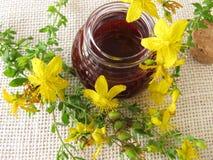 St. John's wort oil in bottle Stock Image