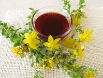 St. John's wort oil Stock Images