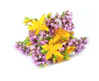 St. John's Wort and origanum flower Royalty Free Stock Image