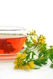 St. John's Wort Tea. A cup of St. John's Wort Tea with fresh flowers Stock Images