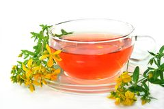 St. John's Wort Tea. A cup of St. John's Wort Tea with fresh flowers Royalty Free Stock Images