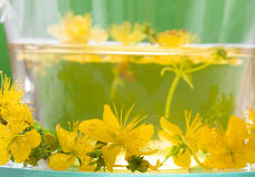 St john's wort tea - close up Stock Image