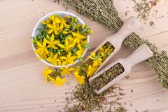 St. John`s wort. Top view on dried and fresh, flowering St. John`s wort on a wooden background Stock Image