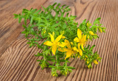 St. John's wort Royalty Free Stock Photography