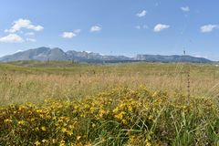 St. John`s Worth in the meadow and the Durmitor mountain in the distance Stock Photo