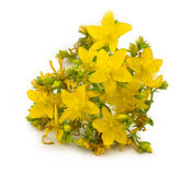 St.John wort's Royalty Free Stock Photos