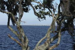 St Johns River in Florida stockbilder