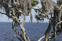 St Johns River in Florida lizenzfreie stockbilder