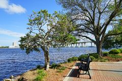 St Johns river and tree. St Johns river Landscape in Jacksonville Florida, USA Royalty Free Stock Image