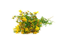 St Johns wort Stock Photo