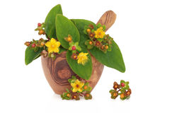 St Johns Wort Herb and Flowers Royalty Free Stock Images