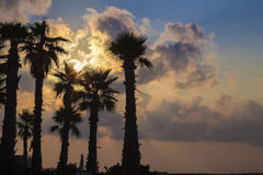 St.Julians, Malta - Silhouette of palm trees on colorful sunrise. With amazing clouds Royalty Free Stock Images