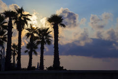 St.Julians, Malta - Silhouette of palm trees on colorful sunrise. With beautiful clouds Stock Photos
