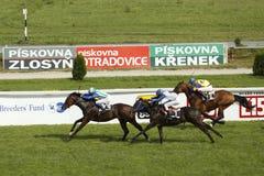 St. Leger de paardenrennen eindigen Stock Foto's