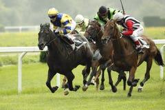 St. Leger paardenrennen Stock Foto