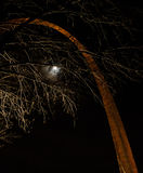 St Louis Arch bij nacht Stock Foto