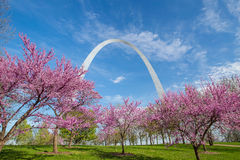 St. Louis Gateway Arch. In Missouri with pink flower and blue sky Stock Photo