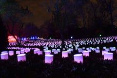 St Louis, Missouri, usa - Nov 22 2017: Wakacji światła przy Missouri ogródem botanicznym Obrazy Royalty Free