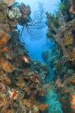 st lucia коралла Стоковая Фотография RF