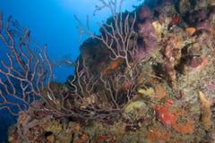 st lucia коралла Стоковое Изображение RF