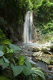 St Lucia Botanical Gardens de la cascada Imagen de archivo