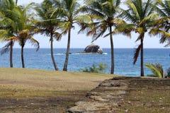St Lucia drzewka palmowe i turkus woda - Gołębia wyspa - obrazy stock