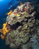 St Lucia korallbildande Royaltyfri Foto
