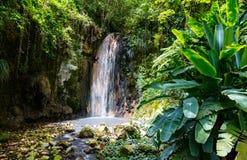 St Lucia landscape. Beautiful landscape of Diamond waterfall on Saint Lucia island in Caribbean stock photos