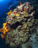 ST LUCIA REEF SCENE Royalty Free Stock Photography