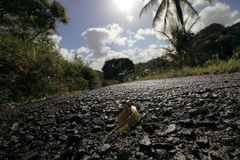 St Lucia Road Stock Photography