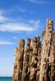 St Malo wood fences. St Malo beach wood fences Royalty Free Stock Photo