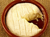 St marcellin a french cheese Royalty Free Stock Photos