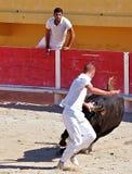 St marie de la mer of bullfighting camargue Stock Image