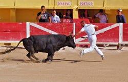 St marie de la mer of bullfighting camargue Stock Photos