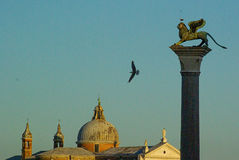St. Mark`s Square: the sky and seagulls. Stock Photography