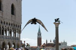 St Mark square in Venice Royalty Free Stock Photo