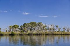 St. Martins Marsh Aquatic Preserve Royalty Free Stock Images