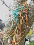 St Martins Mermaid Tree Photographie stock libre de droits
