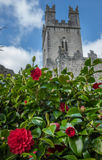 St Mary Cathedral in Limerick. Old St Mary Cathedral in Limerick, Ireland, with blooming purple flowers in the foreground Royalty Free Stock Images