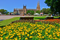 St Mary's Cathedral and Hyde Park in Sydney Stock Images