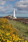 St Mary`s Lighthouse and causeway Stock Image