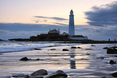 St Mary's Lighthouse and Gull. St Mary's Lighthouse on the coast of North Tyneside, North East England. It is connected to the Mainland by a tidal causeway Royalty Free Stock Photo